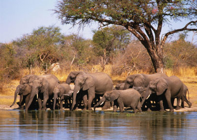 Hwange-waterhole-1 - Copy
