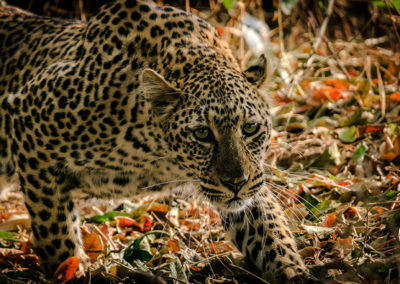 africa-animal-animal-photography-1109907 - Copy